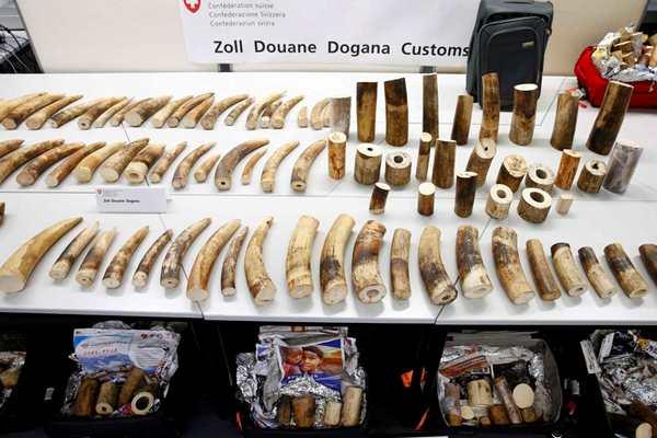 苏黎世机场北京航班查获大批象牙 3名涉案中国人被捕