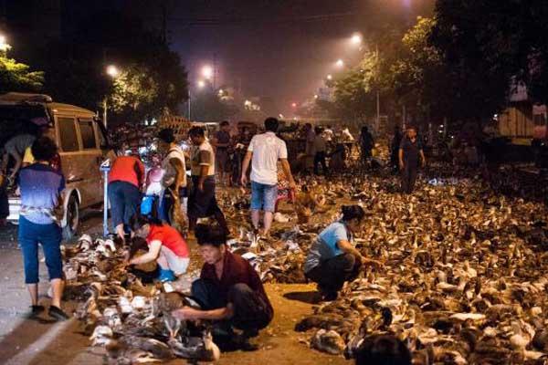 """广西""""鬼节""""来临 十万鸭子铺满街道通宵贩卖"""