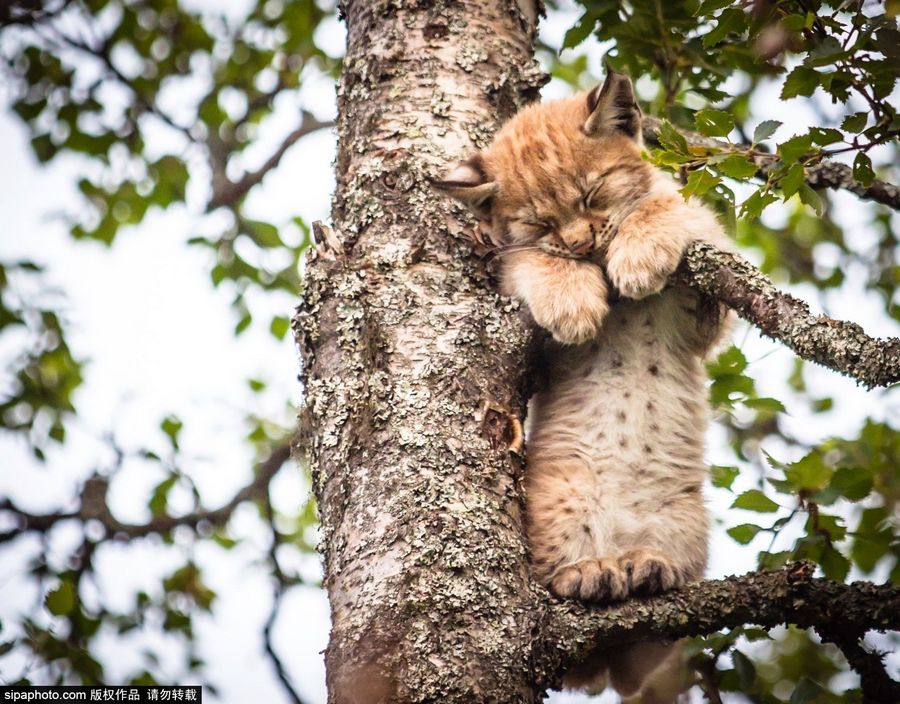 动物老山猫图片