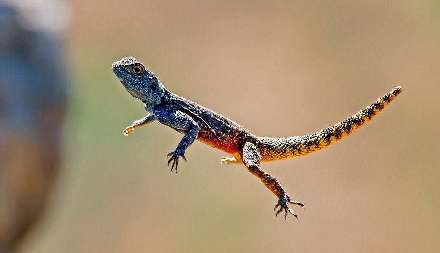 南非摄影师近距离抓拍动物捕猎飞行瞬间