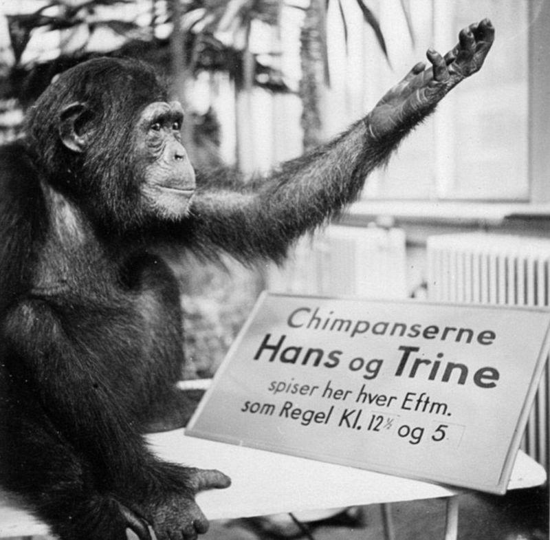 丹麦动物园拍黑白照记录动物真实生活
