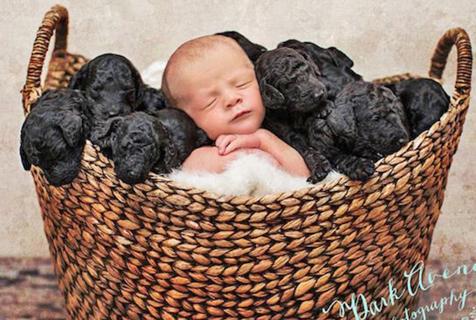 美新生儿与9只初生小狗同篮打盹