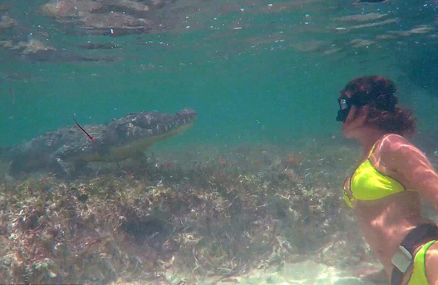 意大利美女模特水下与美洲鳄同游嬉戏