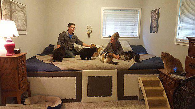 美有爱情侣造3米长大床与7只宠物同眠