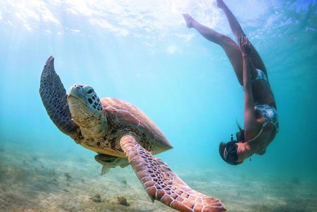 法摄影师水下与海洋生物和谐同游