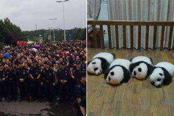 """国庆成都熊猫基地变""""人类基地"""""""