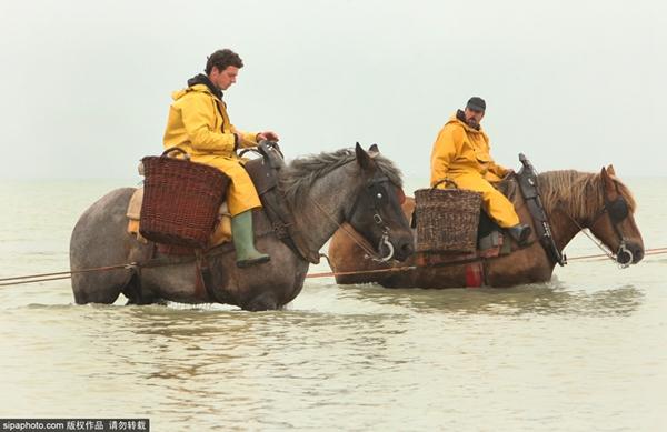 比利时海滨小城的非物质文化遗产——骑马捕虾