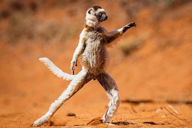 野生动物喜剧摄影大赛入围优秀作品