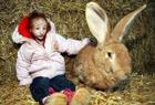 最迷你女孩和兔子一样大