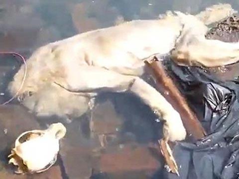巴拉圭现人形腐尸 当地人说是神秘的吸血怪兽