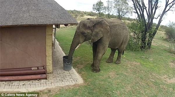 南非公园大象被发现捡垃圾