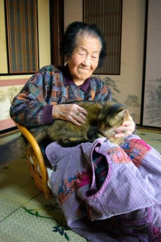 日本神秘猫咪当信使 送八百封信揭尘封过往(图)
