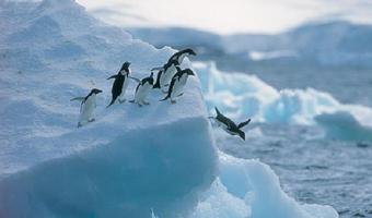 南极半岛16天