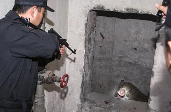 百斤野猪误闯小区被特警击毙