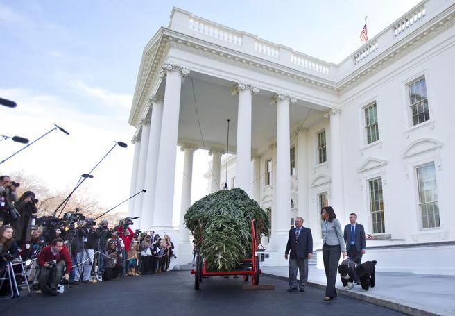 """圣诞季将至 米歇尔白宫""""签收""""圣诞树"""