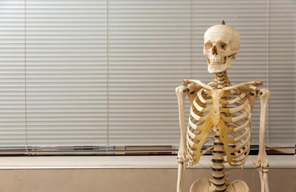 英国一学校竟用真人骨骼进行教学