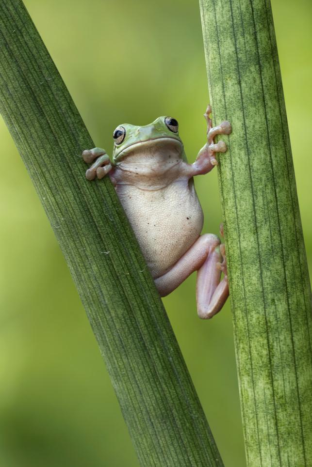有趣的动物摄影 自然界的萌萌哒小生灵