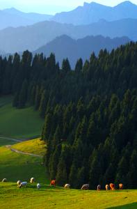 新疆维吾尔自治区加快丝绸之路经济带建设的调研