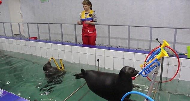 海豹吹萨克斯画画 不愧是俄罗斯的!