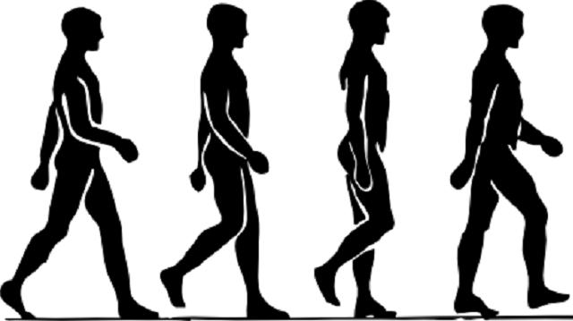 走路的人 和人走路一樣的動物 人走路運動規律分解圖圖片