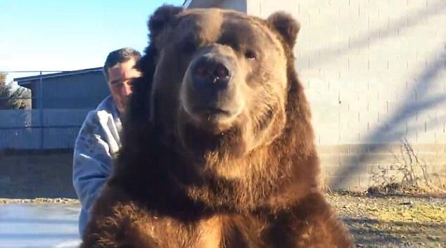 大棕熊是世界上最危险的动物