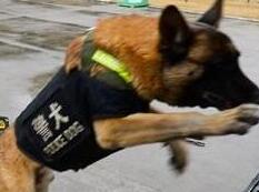 安徽武警备战春运出动无人机 警犬抢镜(组图)
