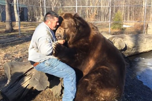俄大胆男子和棕熊亲密拥抱增进感情