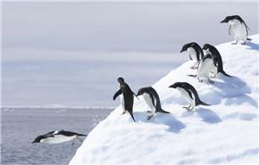 南极半岛22日游
