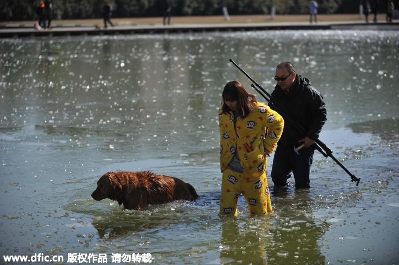 安徽一金毛犬掉入湖面冰窟 市民破冰救援
