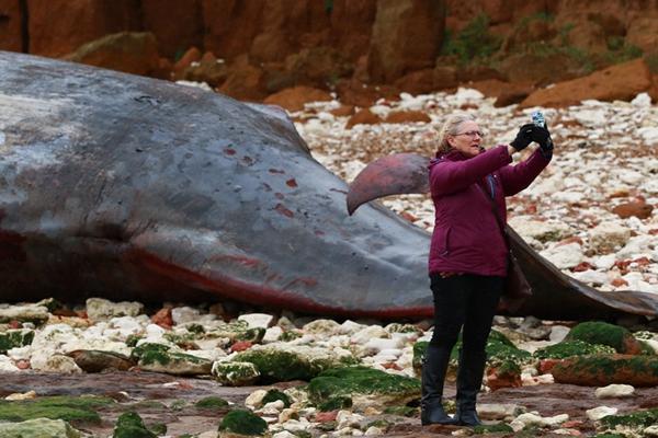 英国海岸发现5头抹香鲸尸体 游客蜂拥而至拍照留念