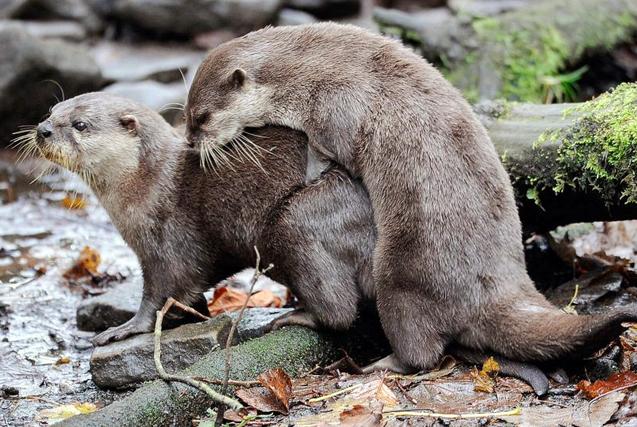 【2015·环球瞬间】动物温情一刻
