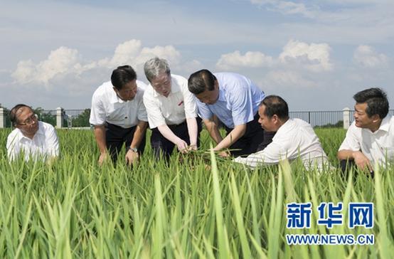 """习近平支招""""三农""""问题 五大发展理念贯穿始终"""