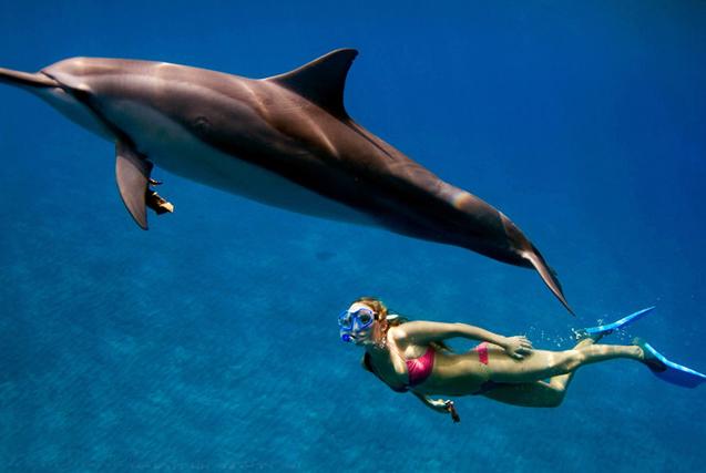 夏威夷女子与海豚成好友 亲密同游