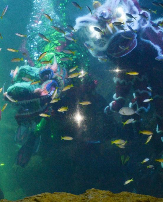 印尼水族馆庆祝中国年:水下舞狮创意十足