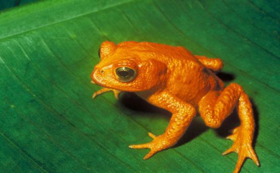 可爱可怜 盘点过去十年灭绝消失的十大物种