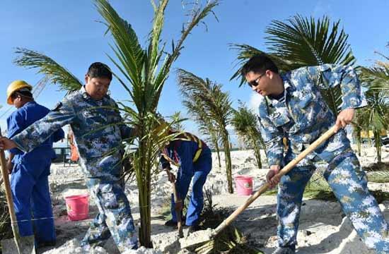 渚碧礁官兵与建设者种椰子树