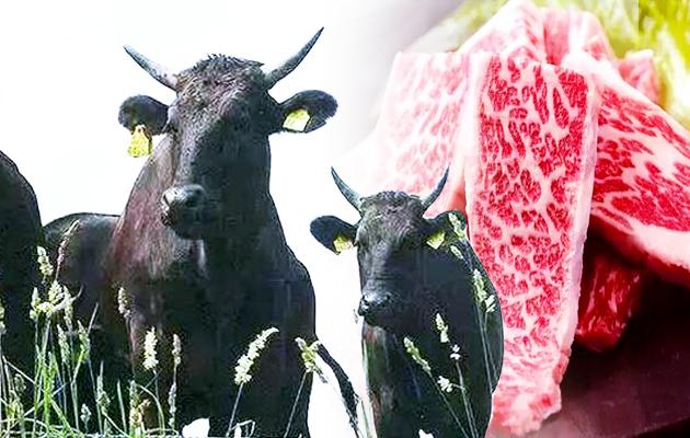 日本神户牛、松阪牛真有那么牛?