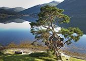 苏格兰湖畔树屋适合情侣享受浪漫二人世界