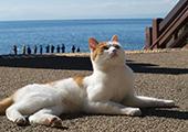 日本旅游·盘点猫咪带动当地旅游的日本猫街