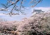春秋航空直飞大阪新航线 赴日赏樱仅299