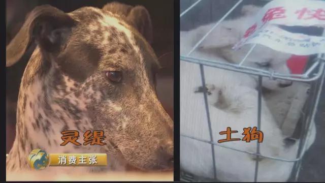 央视曝光:58同城、赶集网惊现网购宠物骗局