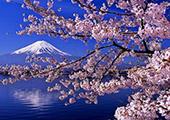 又到山花烂漫时:春暖花开 说说赏樱那些事