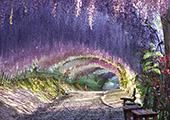 日本旅游·春游日本 去穿梭鲜花隧道