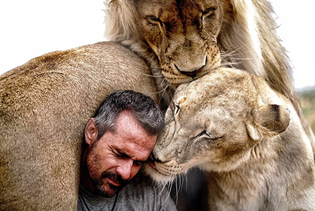 """南非""""狮语者""""与狮群亲密接触唤保护意识"""
