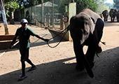 世界上第一所大象孤儿院:斯里兰卡大象孤儿院