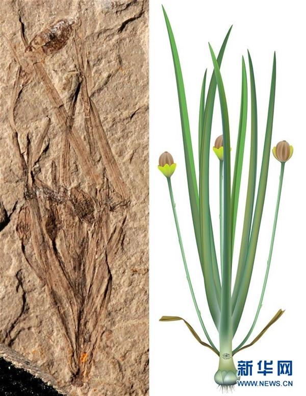 中国发现世界最早草本被子植物:震惊世界(图)