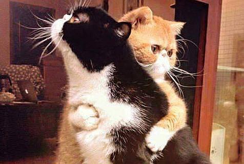 缺乏安全感 需要爱的抱抱