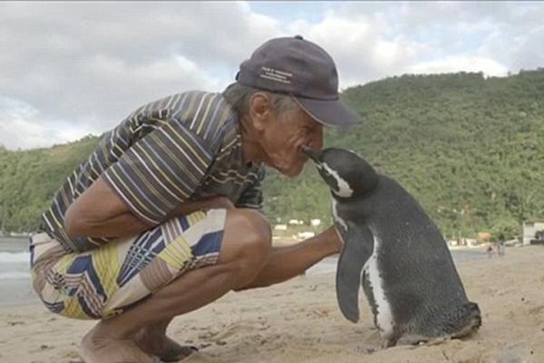 救命之恩永生难忘:企鹅游5000英里看望老人