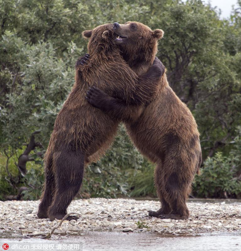 两个动物拥抱的图片