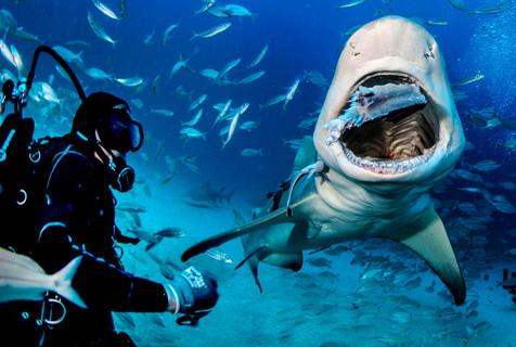 美老人和凶残鲨鱼要好竟徒手喂食